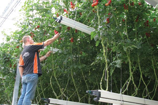 Futagrow: glasshouse vegetable-growing format claims a 20 per cent better yield than traditional systems - image: Metazet/Formflex