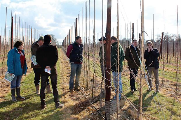 Cameo club walk: group invited to see 8ha orchard planted in 2013 - image: HW