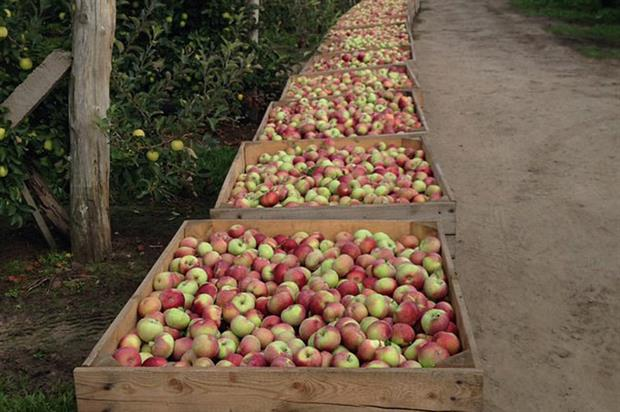 Poland: largest EU apple grower