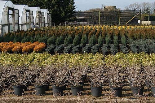 Large quantities of stock sooner than expected has fed demand from garden centres - image: HW