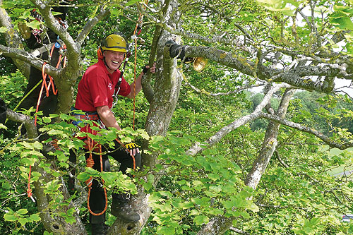 Equipment will be tested on trees in the estate - image: ARB Show