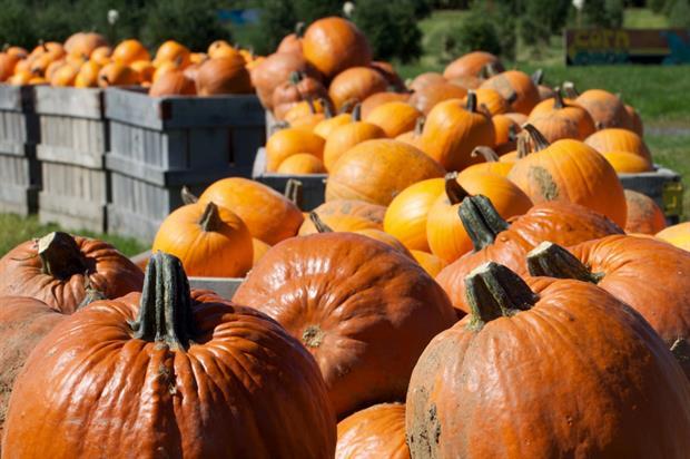 Pumpkins: a premium product