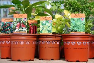 "Baginton's ""Grown in Coventry"" pots - image:Baginton"