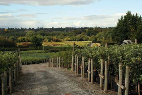 New rootstock is bringing fruit trees into production earlier while keeping them small and offering better resistance to diseases - image: HW
