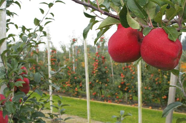 Apples: countries agreed market withdrawal is the right approach