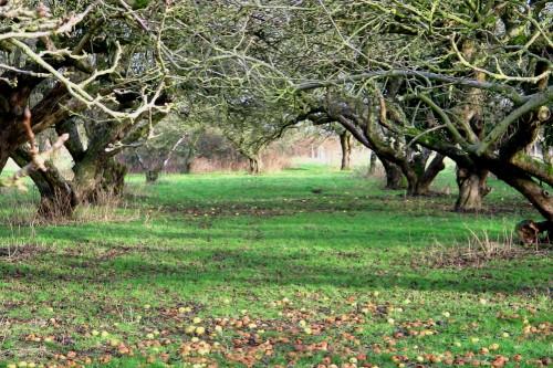 orchard - image: Mark Shirley