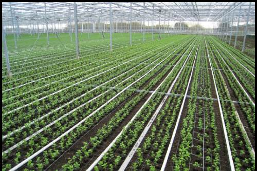 Review of Ornamentals Production 2011 - image: HW