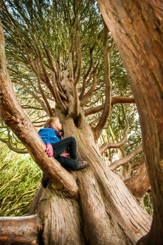The National Trust's choice of best tree to climb