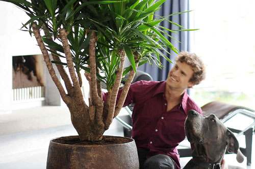 Houseplants can signify a healthy libido according to study - image: Flower Council of Holland