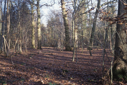 The felling of trees at Northfield Wood was carried out gradually to ensure optimal light levels for natural regeneration - image: WTPL/Nick Cobbing