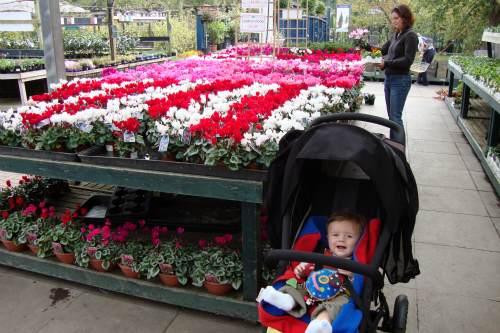 Garden retail sales rise in June despite poor weather - image: HW