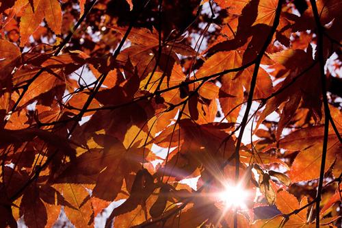 Autumn: Batsford predicting glorious colours - image  © Morgue