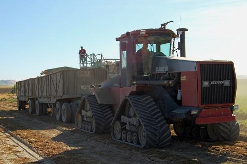 Carrot harvesting - image: Mark Levisay