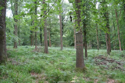 Forest research events aim to raise awareness of tree pests and diseases such as Phytophthora lateralis - image: HW