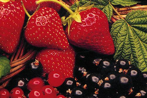 Soft fruit: benefitting fro products extending shelf life. Image: HW