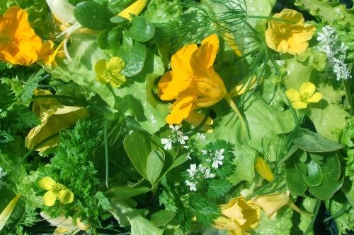 Maddock Farm Organics' summer herb salad - image: MFO