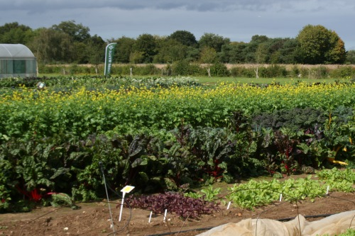 Tozer Seeds trial ground - image:HW