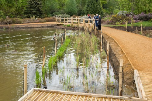 Peg's Pond in Richmond Park