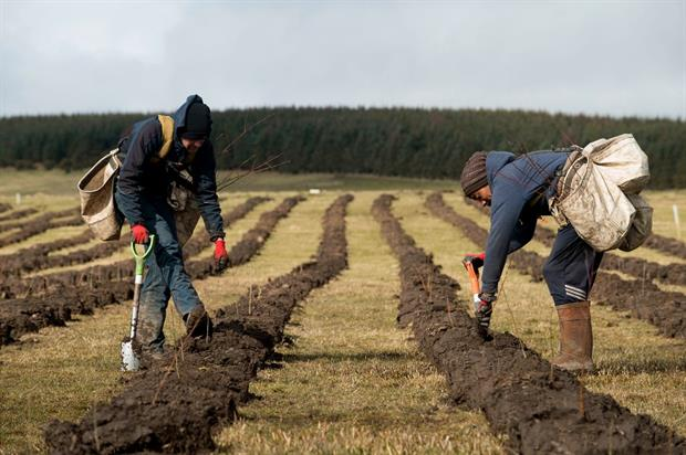 Forest planting at Doddington North Moor near Wooler - image: Confor
