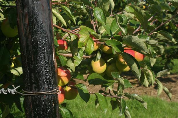 Orchards: enhanced monitoring - image: HW