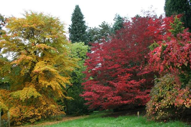 Trees have burst into vibrant colours at the arboretum