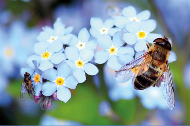 Bees: survey shows high level of support for cutting use of harmful pesticides and more planting in public spaces - image: Pixabay