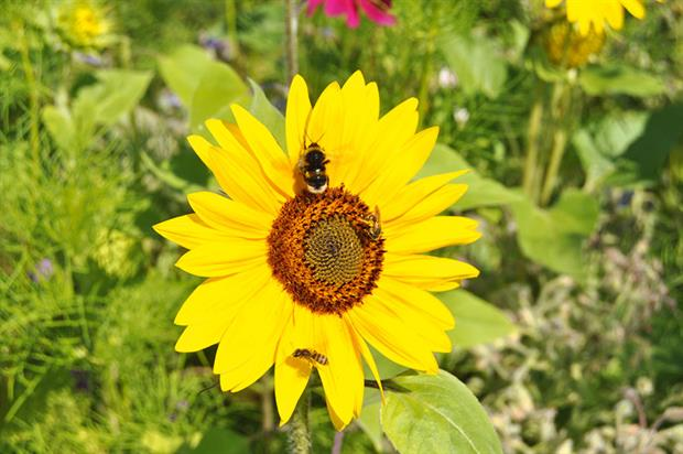 Bees: research identifies opportunity for garden centres to improve the supply chain in terms of bee-friendliness