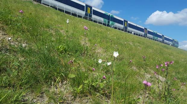 Japanese Knotweed was replaced with wildflowers. Image: Network Rail