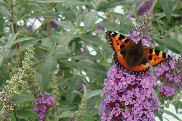 Butterflies: among the species to have suffered decline