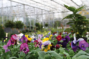 Growers: message from Bedding Focus converence in October was to reach out to the consumer and to market themselves better. Image: HW
