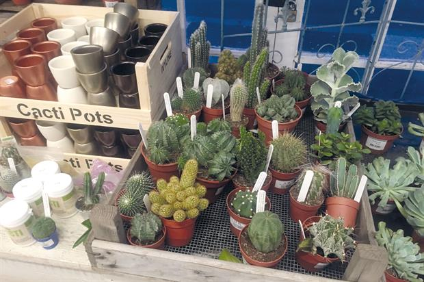 Cacti: a suggested trend in John Lewis shopping report - image: HW