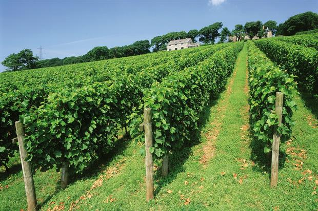 English wine:  huge potential identified for producers