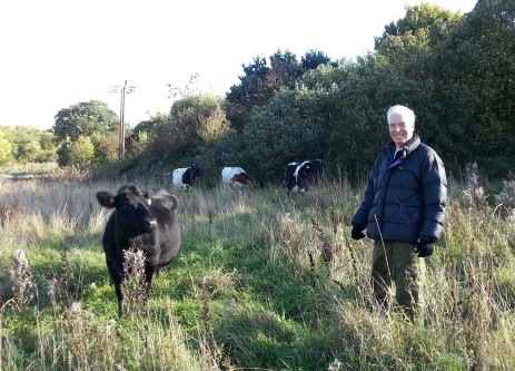 Volunteer cowherd Danny Flynn and the Shetland cattle