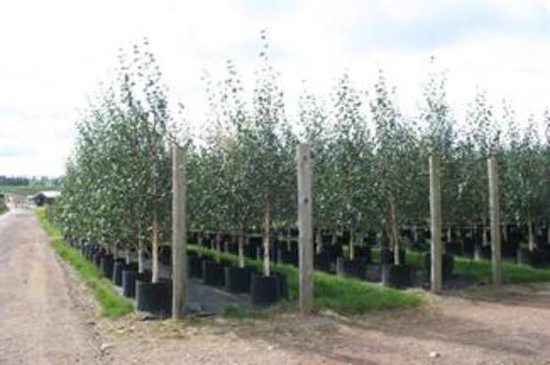 Trees at Coles Nurseries. Image: Vince Edwards