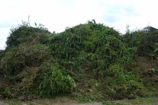 Langmead Farms uses green waste to make compost - photo: WRAP