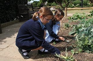 """Park-based lessons as local school children work on """"cross-curricular"""" projects and can take their produce home - image: HW"""
