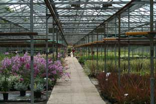 Protected horticulture has exceeded original Government targets on energy efficiency - photo: HW