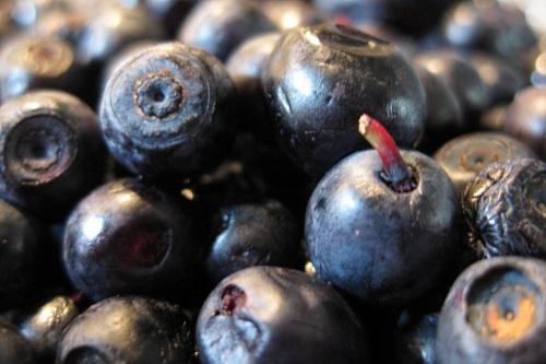 blueberries - image: Marijn de Vries Hoogerwerff