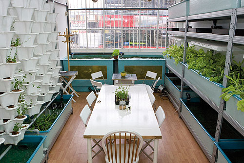 Crops such as basil, grown in a nutrient film technique system, share meeting room space at FARM:shop in London's Dalston - image: HW