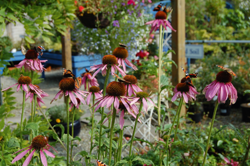 Greenest Garden Centre - The Secret Garden Centre - image: HW