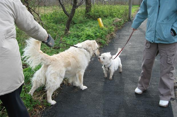 Report says dog walkers are being unfairly penalised. Image: Flickr/Creative Commons/Photo Monkey