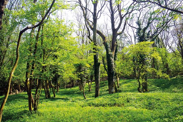 Woodlands: incentives for creation as well as protection for existing sites condemned as insufficient in new report