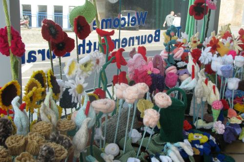 Display of woolly plants at Bournemouth Library - image: Bournemouth Library