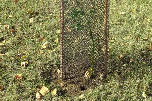 Bio Protectenet is a 100% bio-degradable mesh guard  - image: Amenity Land Solutions