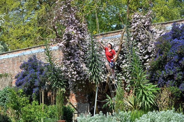 Kate Wilkinson measures the Echium. Image: Matt Clark/National Trust