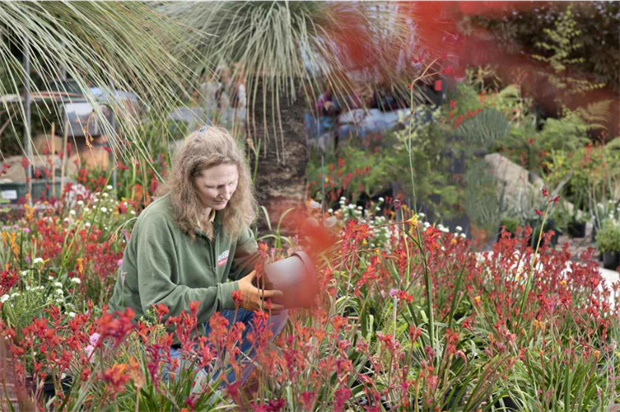 First Australian plants have been installed in the biome. Image: Eden Project