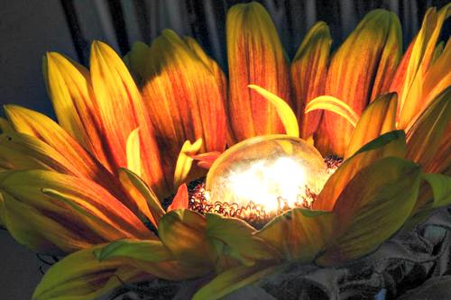Electric sunflower