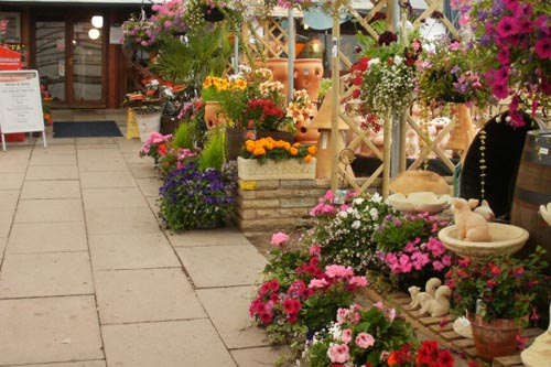 The current Percy Thrower garden centre will be demolished if plans are approved - image: Percy Thrower garden centre