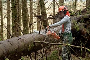 Careers in forestry can be rewarding for women Pic: FC