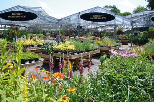 Different heights and colours of individual plants create a dynamic show that can be enhanced by good point of sale material - image: Hambrooks